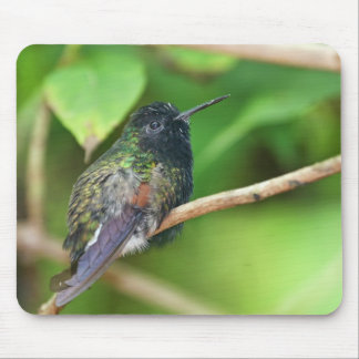 Hummingbird in Jungle Photo Mouse Pad