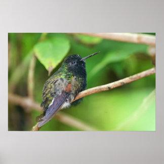 Hummingbird in Jungle Photo Posters