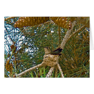 Hummingbird in Nest Photo Card