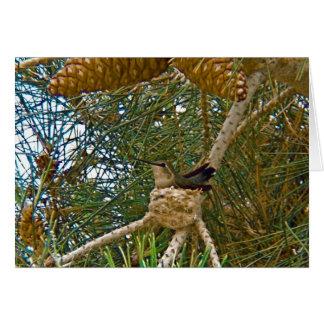 Hummingbird in Nest Photo Card