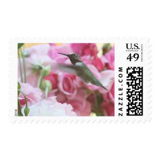 Hummingbird in pink spring flowers postage