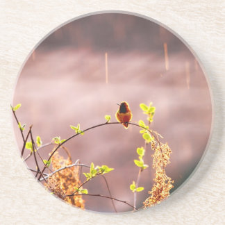 Hummingbird in Rain Shower Coasters