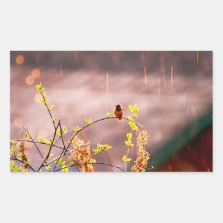 Hummingbird in Rain Shower Rectangular Sticker