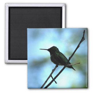 Hummingbird in Silhouette Magnet