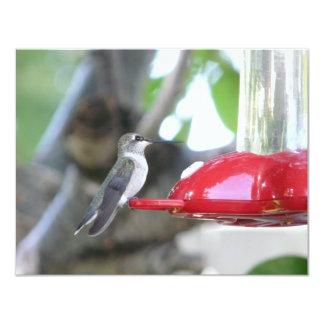 """hummingbird 4.25"""" x 5.5"""" invitation card"""