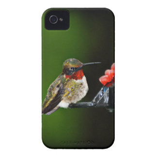 Hummingbird iPhone 4 Case-Mate Case