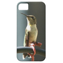 Hummingbird, iPhone 5/6S, Bar4ely There Case. iPhone SE/5/5s Case