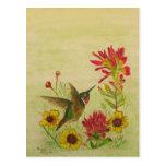 hummingbird.jpg tarjeta postal