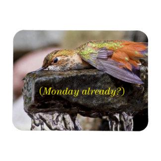 Hummingbird  Laying in Water 2 Rectangular Photo Magnet