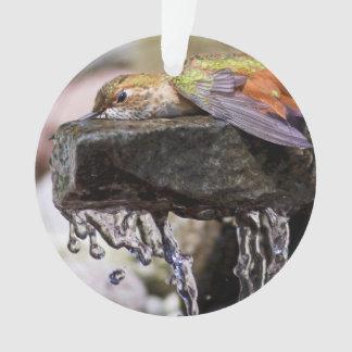 Hummingbird  Laying in Water Ornament