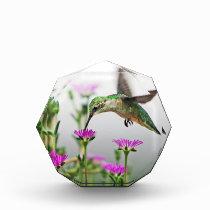 Hummingbird Lunch Paperweight Acrylic Award