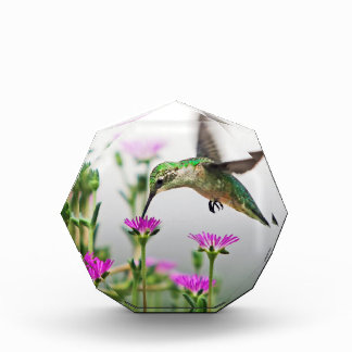 Hummingbird Lunch Paperweight Acrylic Award