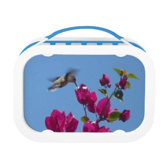 Hummingbird Lunchbox