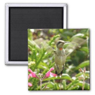 Hummingbird & Maraschino 2 Inch Square Magnet