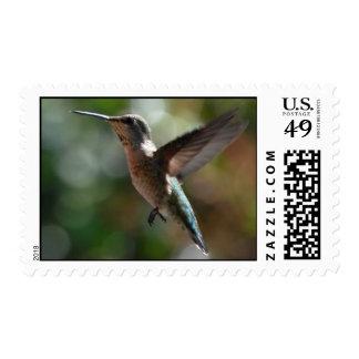 Hummingbird, medium stamps
