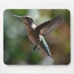 Hummingbird, mousepad