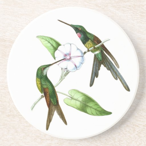 Hummingbird No4 Spring Garden Bird Decor Drink Coaster