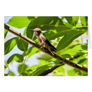 Hummingbird Note cards, Cutomizable Card