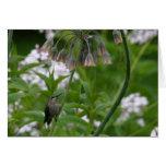 Hummingbird Notecard Greeting Cards