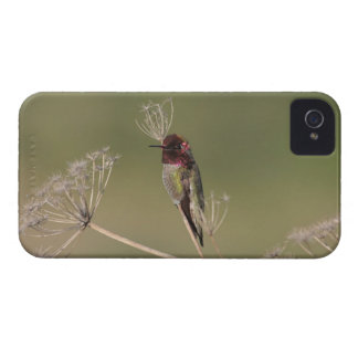 Hummingbird on a Branch Blackberry Bold Case