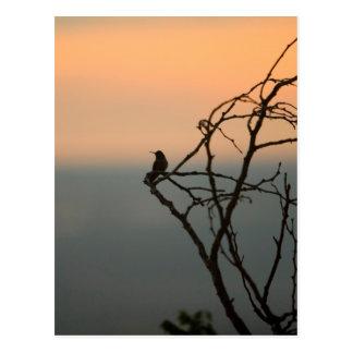 Hummingbird on Branch Postcard