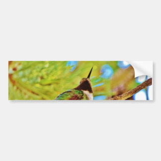 Hummingbird on evergreen car bumper sticker
