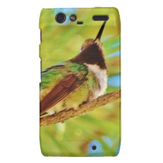 Hummingbird on evergreen motorola droid RAZR cover