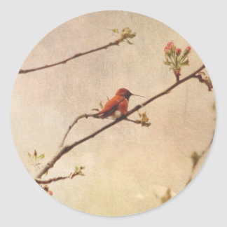 Hummingbird on Flowering Cherry Tree Classic Round Sticker