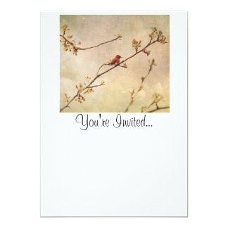 "Hummingbird on Flowering Cherry Tree 5"" X 7"" Invitation Card"
