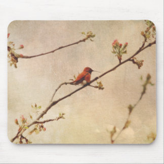 Hummingbird on Flowering Cherry Tree Mouse Pad