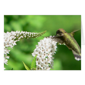 Hummingbird on Gooseneck Card