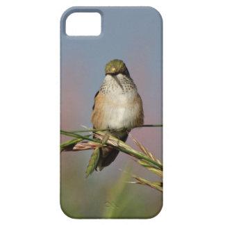 hummingbird on grass iPhone 5/5S cases