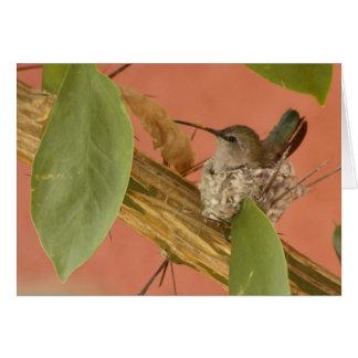 Hummingbird on nest stationery note card