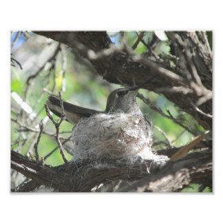Hummingbird on Nest Photo Print