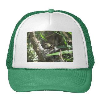 Hummingbird on Nest Trucker Hat