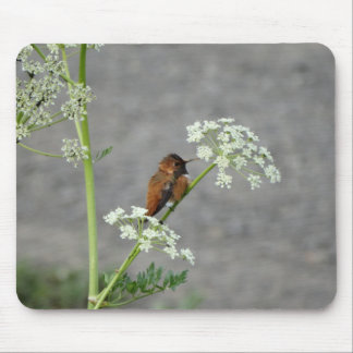 Hummingbird on Queen Ann's lace flower Mousepad