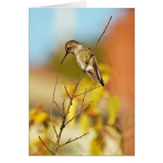 Hummingbird on twig greeting card