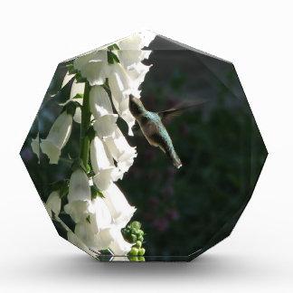 Hummingbird on White Hollyhock Acrylic Award