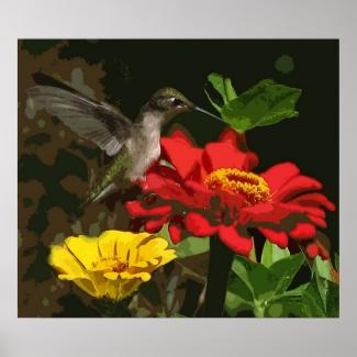Hummingbird on Zinnias