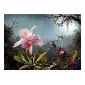 Hummingbird orchid flower tropical forest painting postcard