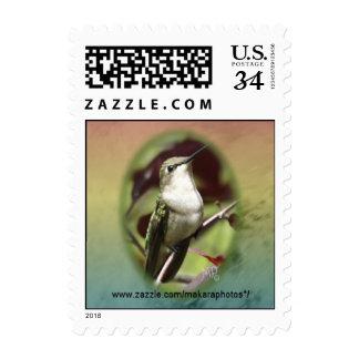 Hummingbird Oval Postcard Stamp- customize Postage