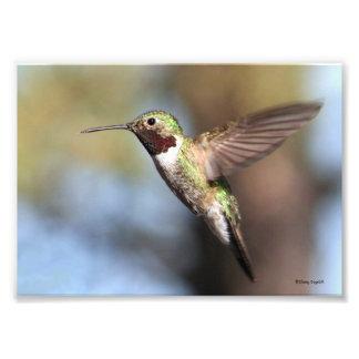 Hummingbird Pause Photo Print