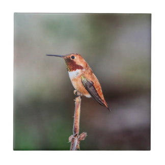 Hummingbird Photo Ceramic Tile