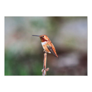 "Hummingbird Photo 5"" X 7"" Invitation Card"