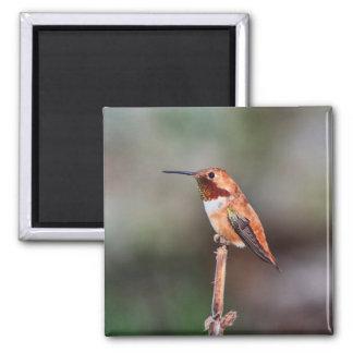 Hummingbird Photo 2 Inch Square Magnet