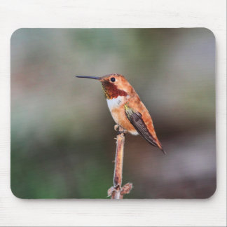 Hummingbird Photo Mouse Pad