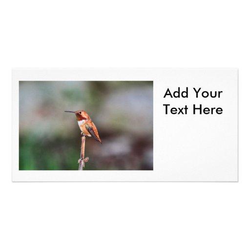 Hummingbird Photo Photo Card