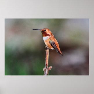 Hummingbird Photo Poster