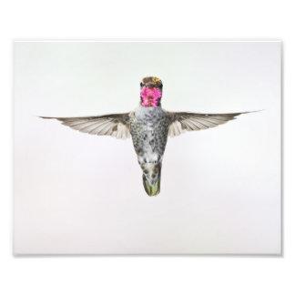 Hummingbird Photo Print
