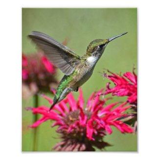 Hummingbird Photography Print Photo Print
